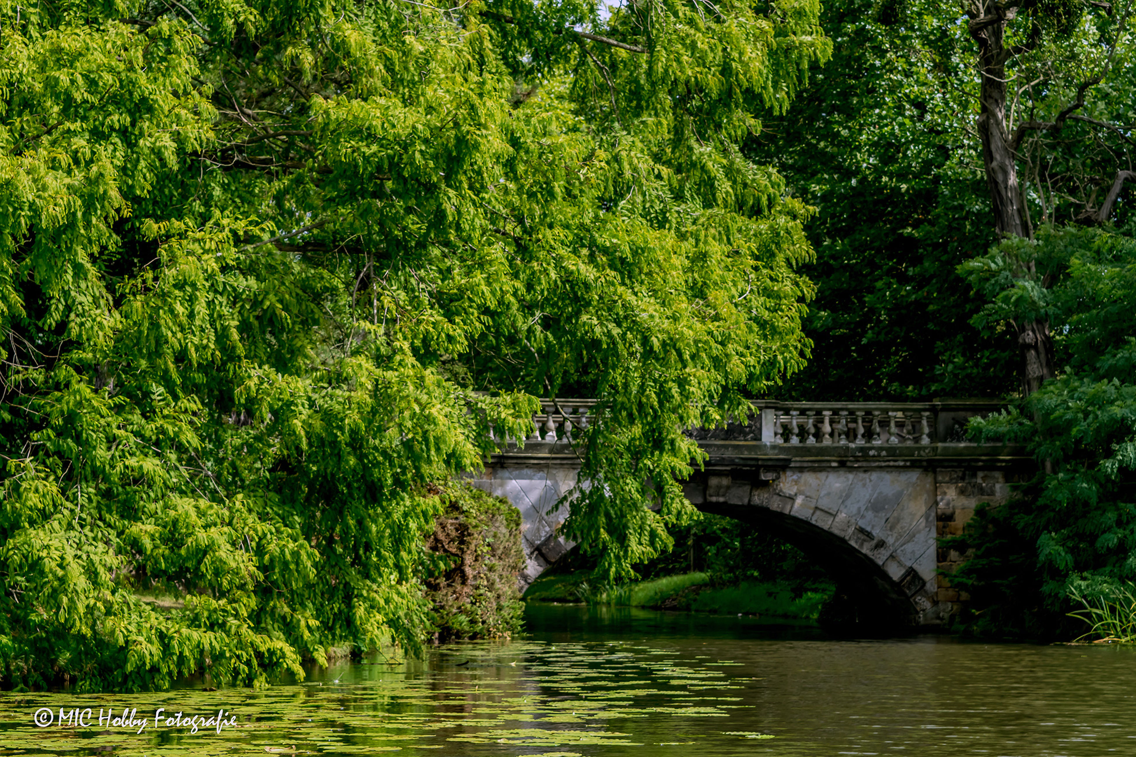 water, tree, bridge - man made structure, connection, tranquil scene, green color, tranquility, scenics, growth, river, park, bridge, garden, beauty in nature, nature, lake, waterfront, park - man made space, lush foliage, footbridge, idyllic, branch, plant, day, non-urban scene, stream, calm, greenery, outdoors, arch, japanese garden, narrow, majestic, no people
