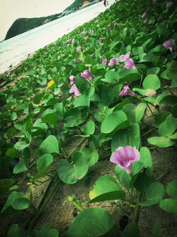Bëach ;) Flower Collection Beach Traveling Beatiful Thailand
