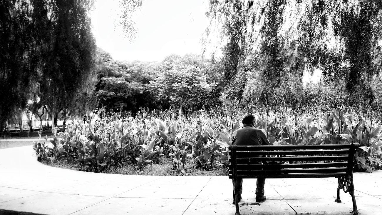 Tratando de no temer, diciendo que está en tu cabeza. Pero aquello te silba a tu oído, diciendo que eso es lo que mereces. Relaxing Park Seeing What We Could See Loving Nature Nature Reflection Parque  Naturaleza First Eyeem Photo
