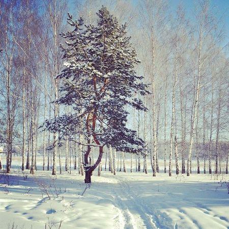 родныепросторы татарстан мояказань