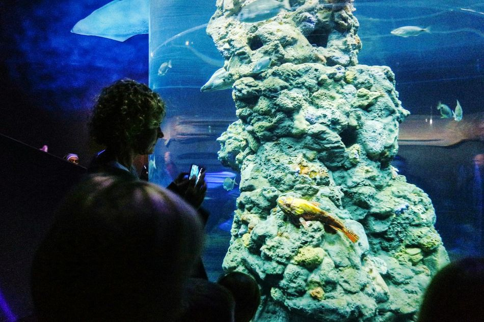 At the aquarium Night Real People Water Architecture Illuminated Outdoors One Person People Only Men Adult Adults Only Close-up Sky Nature_collection Fresh 3 EyeEm Best Shots Eye4photography  Nature Animal Themes Animals In The Wild Aquarium Aquarium Life