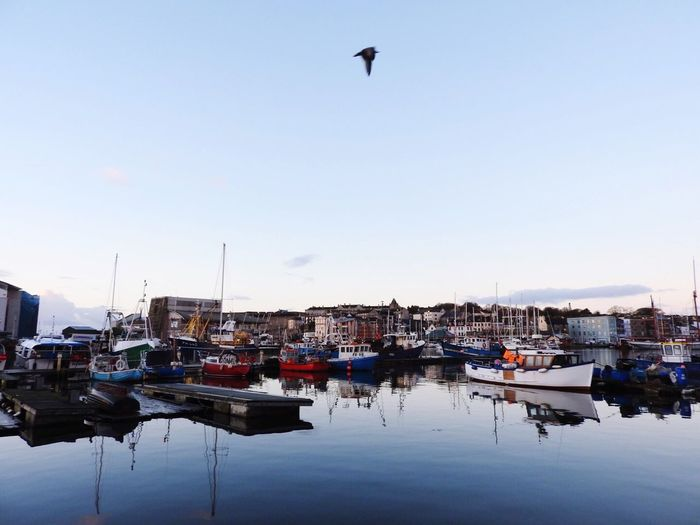 Boats Suttonharbour Plymouth Harbour Sea Sunrise Fishermen Fishing Boat Ready For The Day Seagull Magical Bird Morning Fishing Harbour View Beautiful Stunning Blue Reflection Blue Sky Sea And Sky Clear Sky