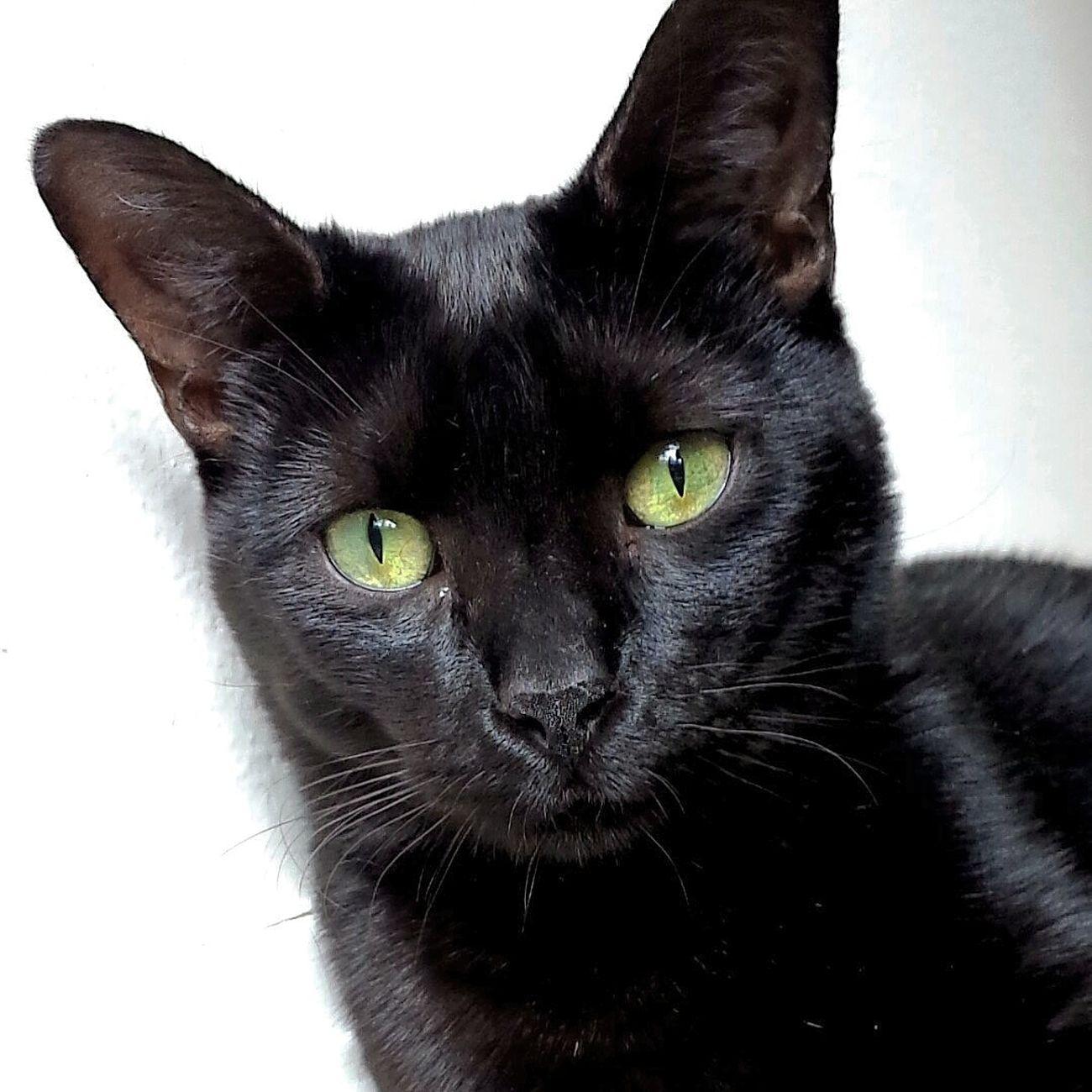 Cat♡ Derp