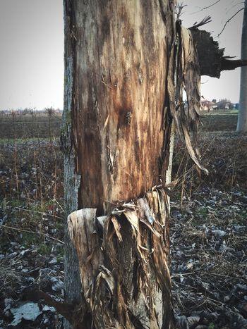 Broken tree Wood Trees Tree TreePorn Legno Bark Tree Bark