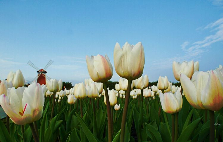 Les Tuileries Gardening Enjoying Life Taichung 散策 EyeEm Natue Lover Enjoying The Sun Landscape_photography