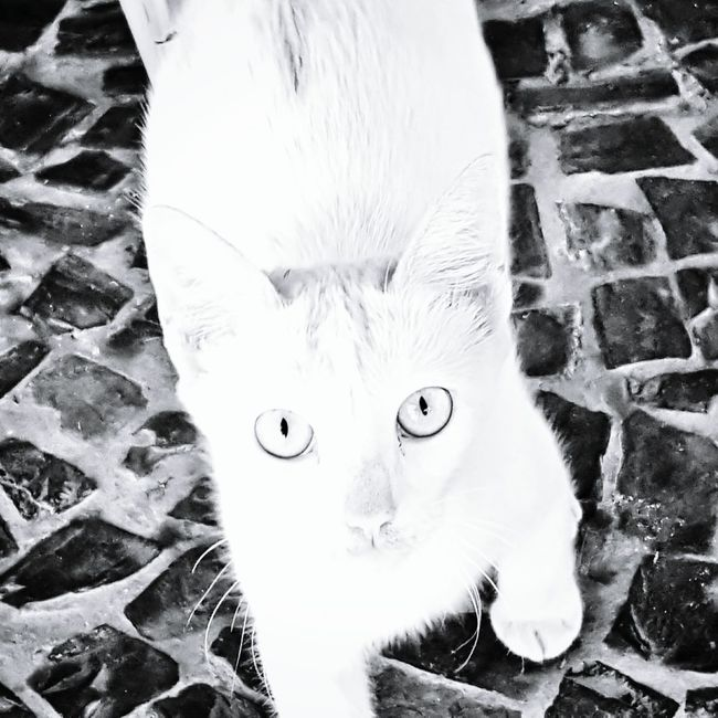 Omegafly Samsung Galaxy S6 Modografiavisual Modografia Cat
