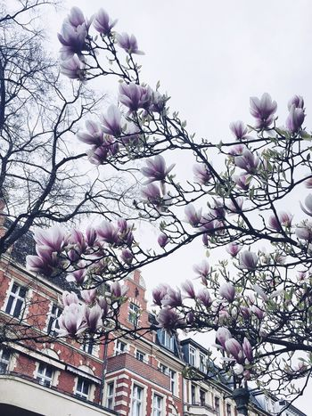 Spring in Berlin Flower Tree Low Angle View Branch Fragility Blossom Beauty In Nature Magnolia Growth Nature No People Pink Color Springtime Freshness Petal Outdoors Day Sky Architecture Building Exterior Berlin Berliner Ansichten Spring Neighborhood Map The Great Outdoors - 2017 EyeEm Awards