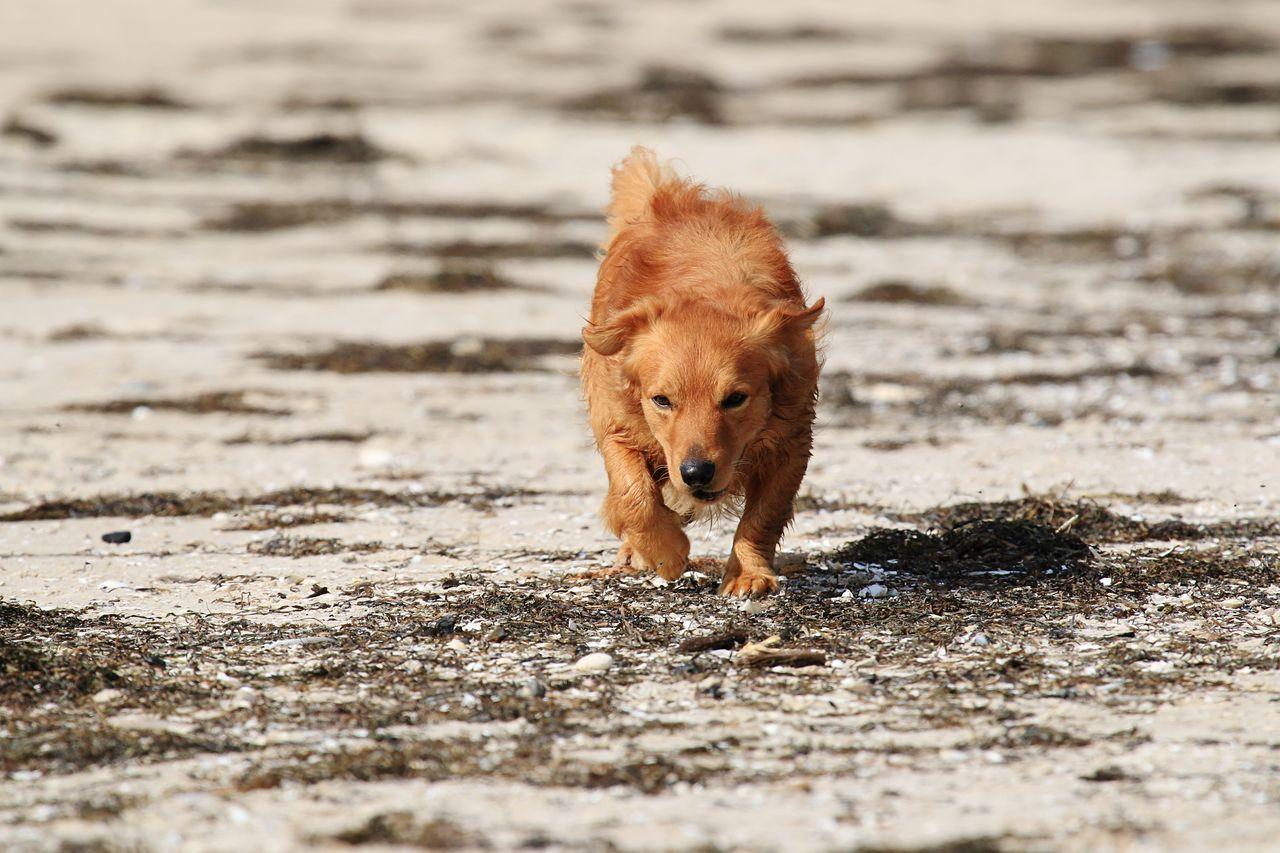 Hund Dog Dogs Hunde Retriever Mischling Animals Pets Cute Animal