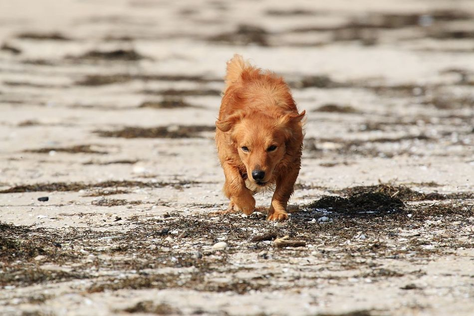 Beautiful stock photos of golden retrievers, Animal Themes, Day, Dog, Domestic Animals