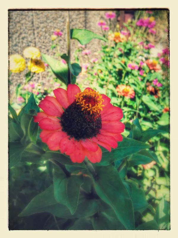 Flower Photography Outside Photography Deposterz Taking Photos Enjoying Life Beautiful