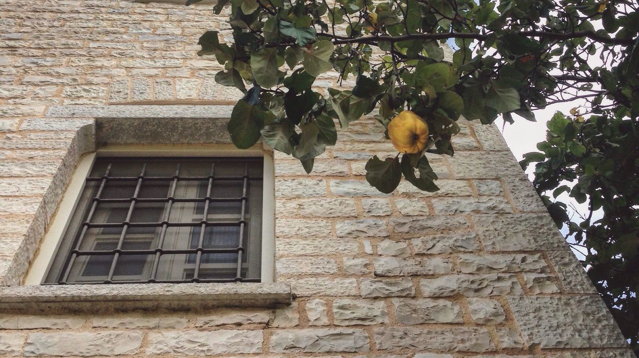 Low Angle View Of Yellow Fruit On Tree Against By Building