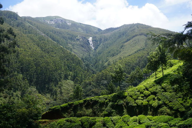 Teaestate Munnar Lush Waterfall Kerala