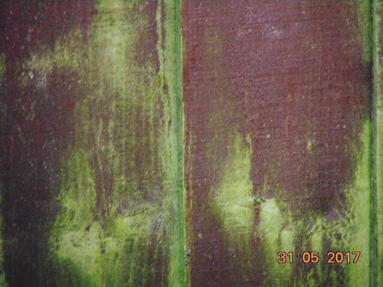 Day No People Outdoors Backgrounds Wood Grain Texture Close-up Painted Wood Textures Green Growth Passing Of Time Nature Takes It Back