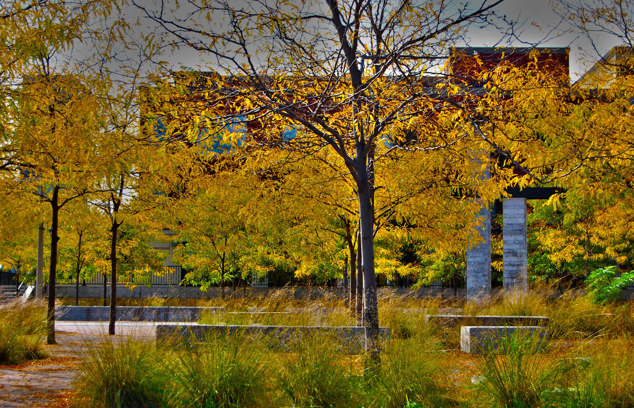 autumn, tree, change, nature, yellow, beauty in nature, outdoors, tranquility, no people, branch, day, leaf, tranquil scene, scenics, water, built structure, lake, building exterior, architecture, sky