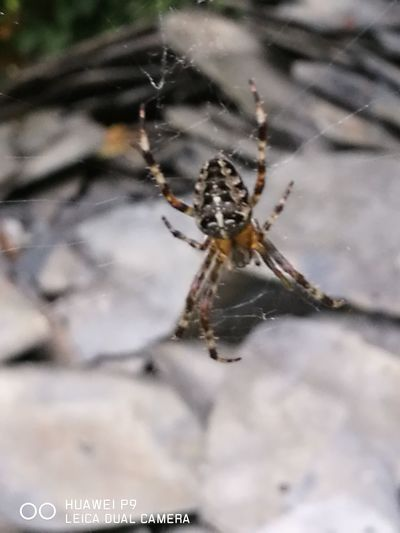 Spinne, Spider One Animal Spider Web Animal Themes Animals In The Wild