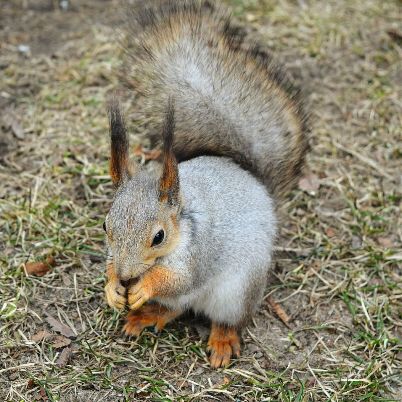 Taking Photos Beauty In Nature Elagin Island Park Squirrel Eating Enjoying Life Nature Photography Photography Spring