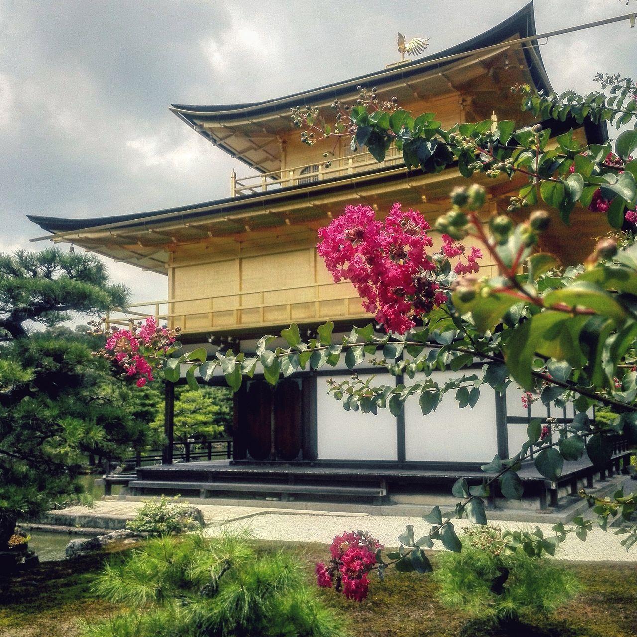Flower Flora Outdoors Building Exterior Architecture Temple Japan Zen Garden Kyoto Meditation Buddhism