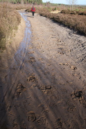 Footprints Hiking Rear View Wet Sand Beauty In Nature Bike Tracks Day Leisure Activity Lifestyles Mammal Men Nature One Person Outdoors People Real People Sand Tracks Walking