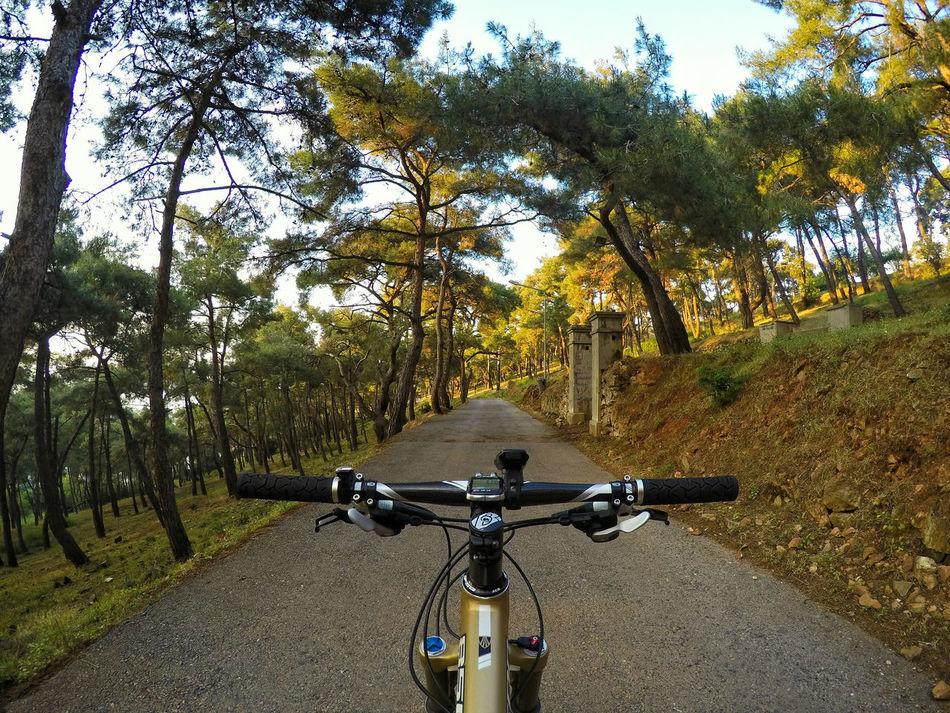 Bike in forest Bicycle Bike Bikeporn Bikeroad Bisiklet Ciclismo Cycling Fahrrad Forest Foxracing Mountainbike MTB Princeislands Roadtrip Shimano Trekbikes Turkey Türkiye