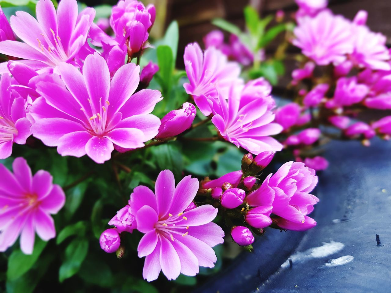 Flower Pink Color Nature Plant Purple Petal Beauty In Nature Fragility No PeopleNature Tyre Garden Focus On Foreground Pink Flower Sunlight Blooming Growth Summer Outdoors Flower Head Close-up Day Freshness Beauty In Nature Fresh
