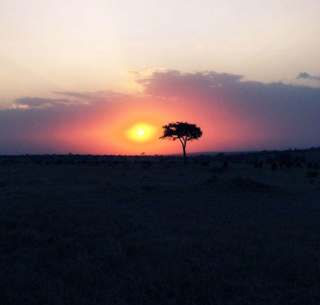 Eyeemphoto Serengeti National Park Serengeti Tree Sunset Tanzania