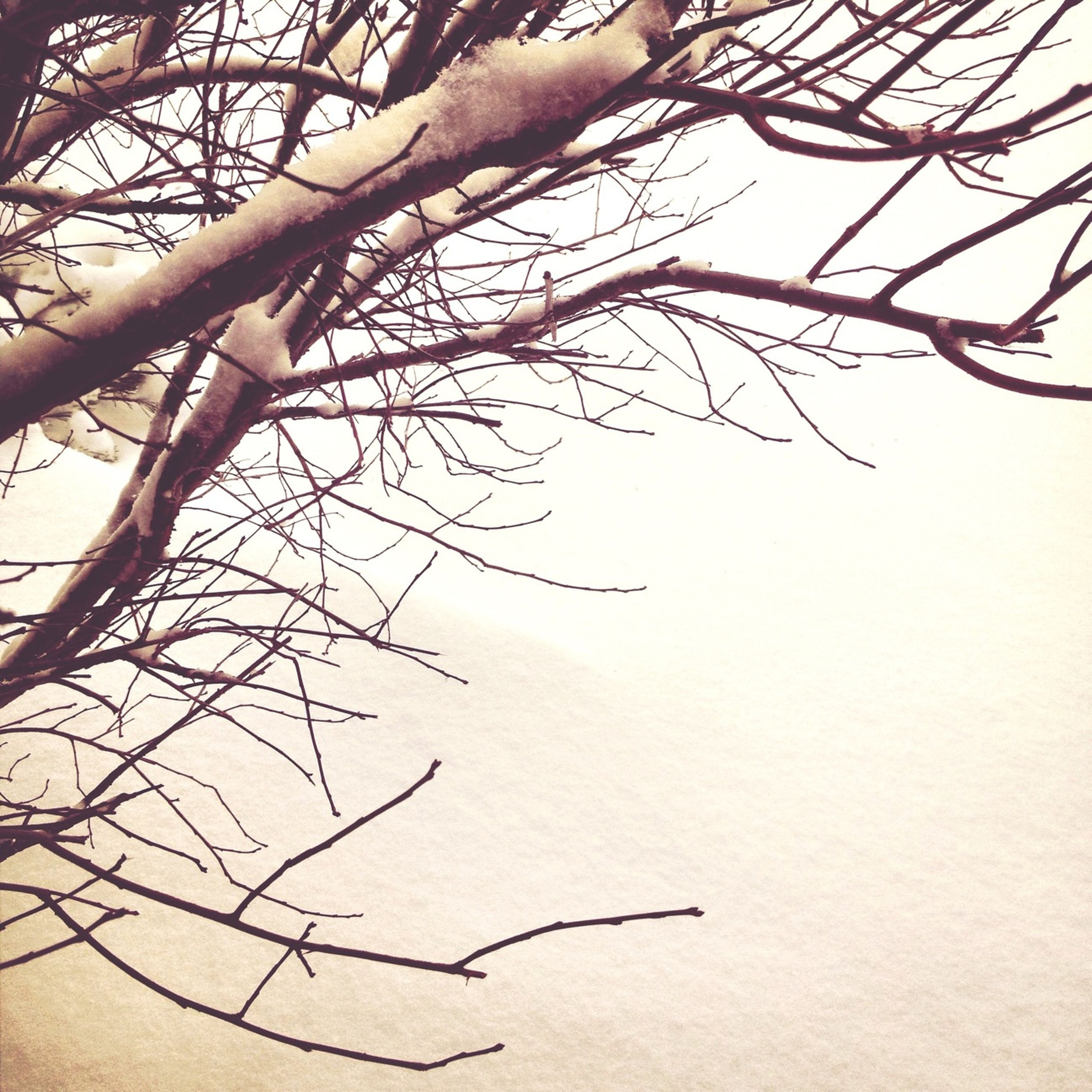 bare tree, branch, tree, tranquility, nature, clear sky, tree trunk, tranquil scene, beauty in nature, scenics, sky, dead plant, outdoors, no people, low angle view, day, growth, twig, non-urban scene, single tree