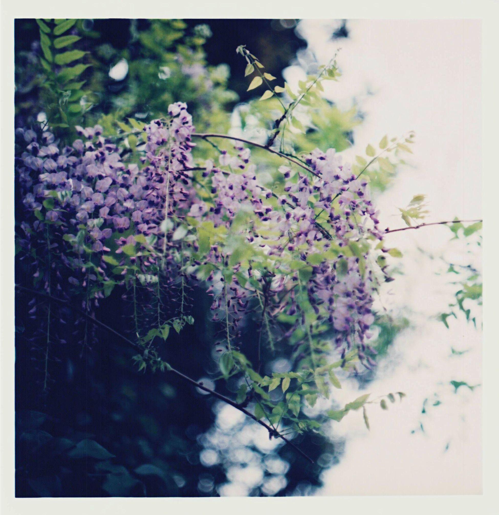 Fuji cascade Film Filmcamera Film Photography Fujifilm Fuji Pro400H Pentacon Pentacon Six Pentacon Six Tl Zeiss Flower Purple Flower Purple