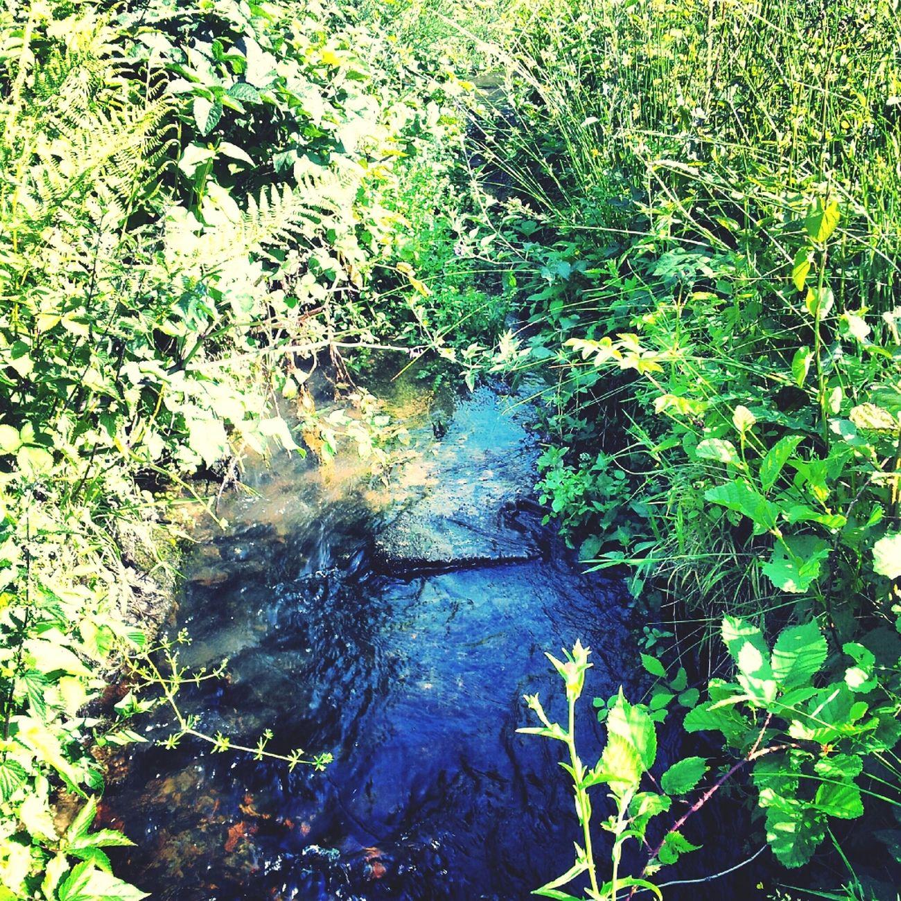 Normandie Gavray Nature Love