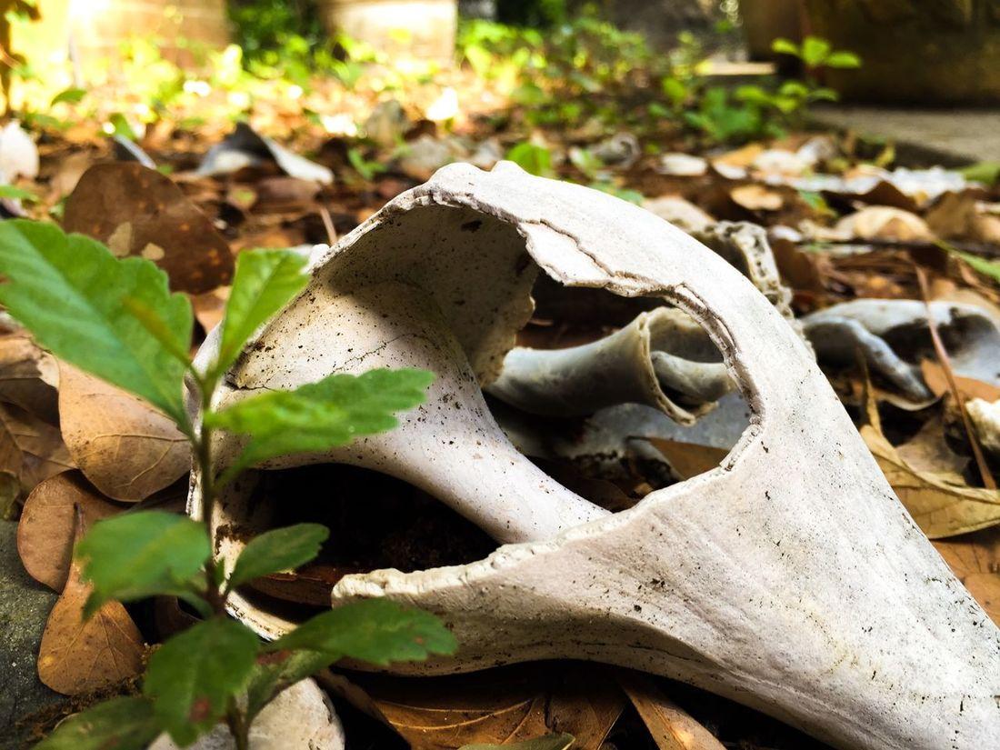 Finds... Seashells Treasures