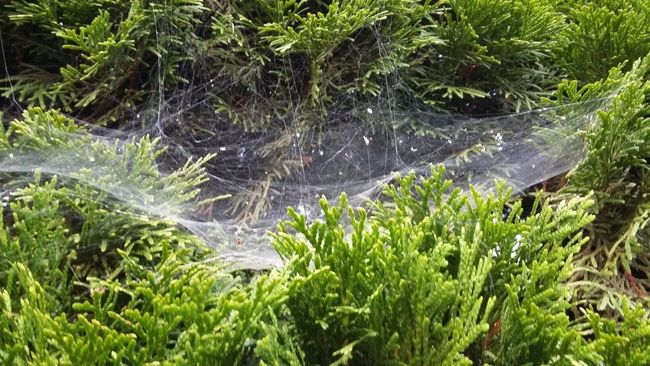 Beauty In Nature Botany Day Green Green Color Growing Growth Nature No People Outdoors Plant Spiderweb Web