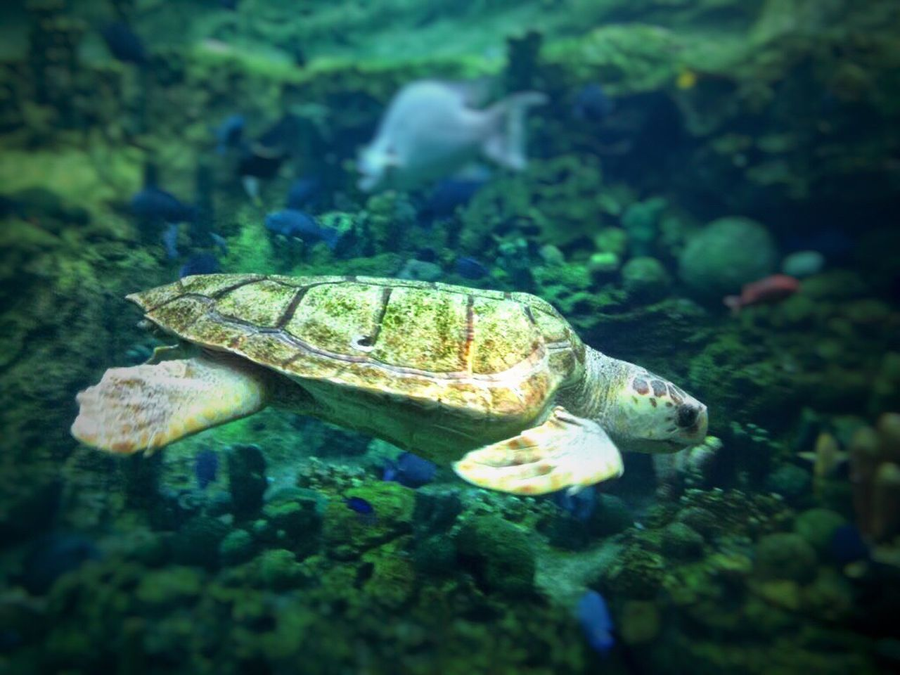 Turtle Caribbean Mexico Animal Themes Underwater Sea Life Reptile Swimming Animals In The Wild Tortoise Water Sea Turtle UnderSea Tortoise Shell Nature No People Day Outdoors Nature Tranquility EyeEm Beauty In Nature Fish Hot Day EyeEm Gallery