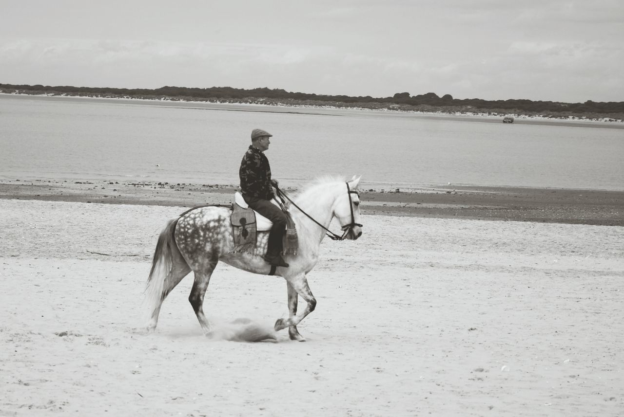 horse, domestic animals, horseback riding, mammal, riding, one animal, sand, beach, sky, men, full length, real people, sea, nature, day, outdoors, water, one person, people