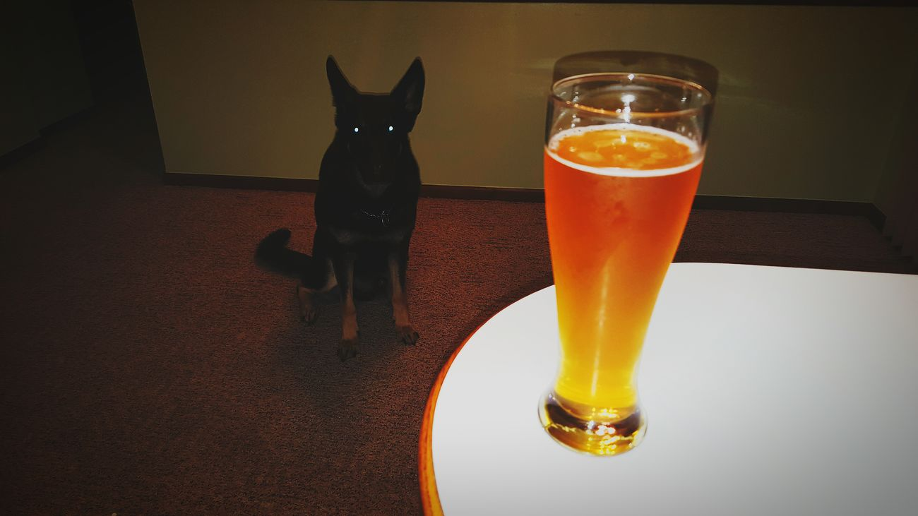 Beer Beersnob IPA Dog Life My Dog German Shepherd Mansbestfriend Black And Tan Dog