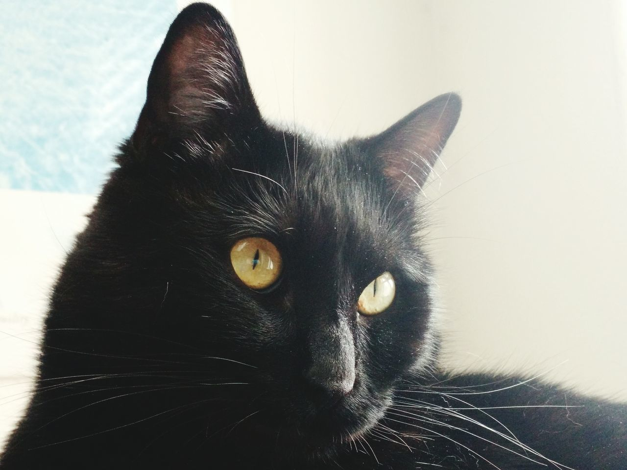 One Animal Pets Domestic Animals Mammal Domestic Cat Animal Themes Black Color Feline Indoors  Close-up Yellow Eyes No People Day Black Cat Photography Gazing Tranquility Black Cat Cat Eyes Cat♡ Cat Gaze Black Cats Are Beautiful Yellow Eyed Cat Cat Lovers Cats Of EyeEm