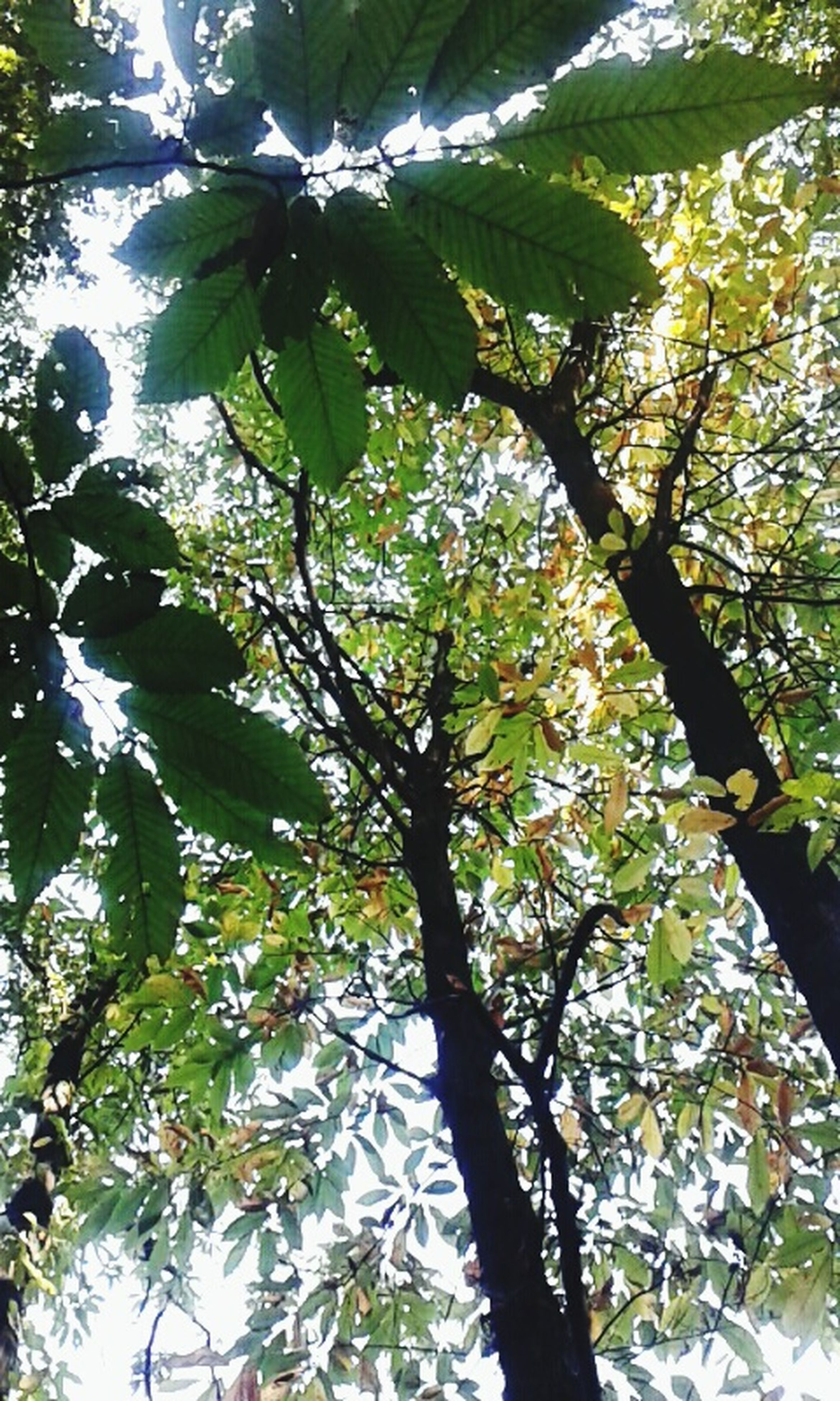 tree, low angle view, branch, growth, nature, leaf, green color, tranquility, tree trunk, beauty in nature, full frame, backgrounds, day, outdoors, no people, sky, sunlight, close-up, forest, scenics