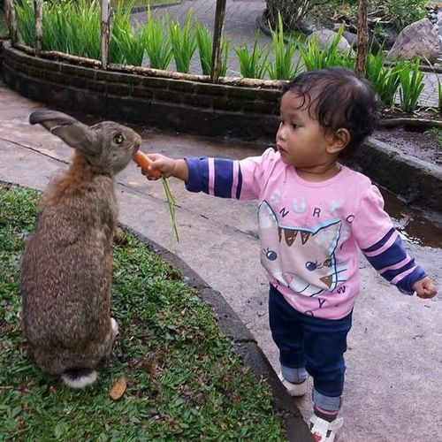 One Animal One Person Animal Childhood Animal Themes Goat Cute One Girl Only Lifestyles Young Animal Kid Goat Outdoors Smiling Mammal People Day