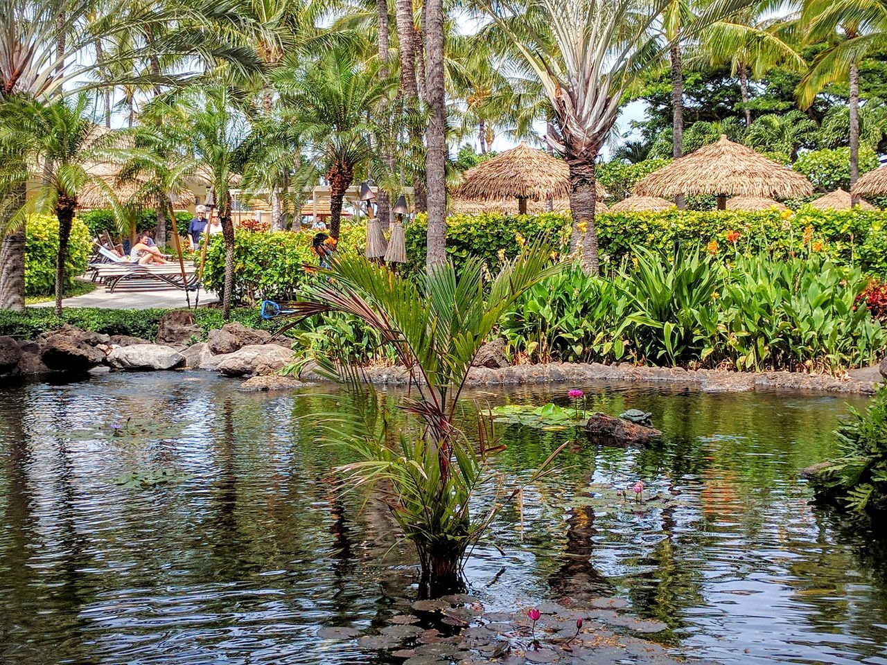 lagoon off of beach club restaurant Water Tranquility Tranquil Scene Green Color Beauty In Nature Travel Destinations Tropical Beauty EyeEm Nature Lover EyeEm Gallery Eyeemphotography Outdoors Tourists Flowers,Plants & Garden Green Nature Coconut Trees Thatched Roof Non-urban Scene Palm Tree Waterfront