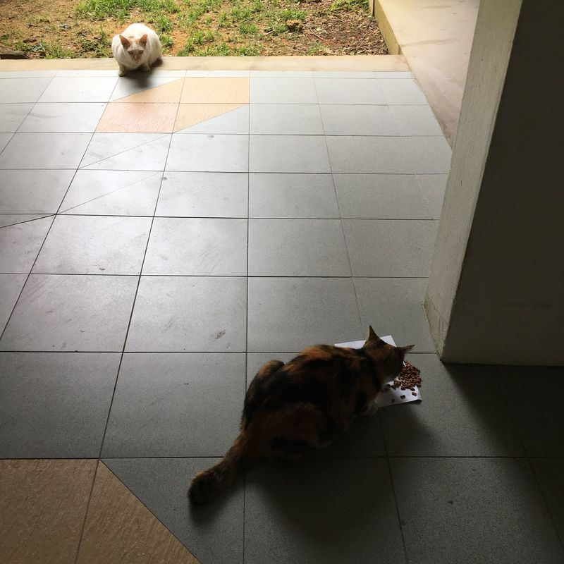 Two cats. Cats Of EyeEm Cat Lovers Cats Catoftheday Cat Photography Catsagram Feline Companions Felines FelineDomesticus Animal Photography Feline Friend Felis Catus Felidae Animals Animal Themes Animal Lover Animalphotography Waiting For Her Turn Waiting For Food