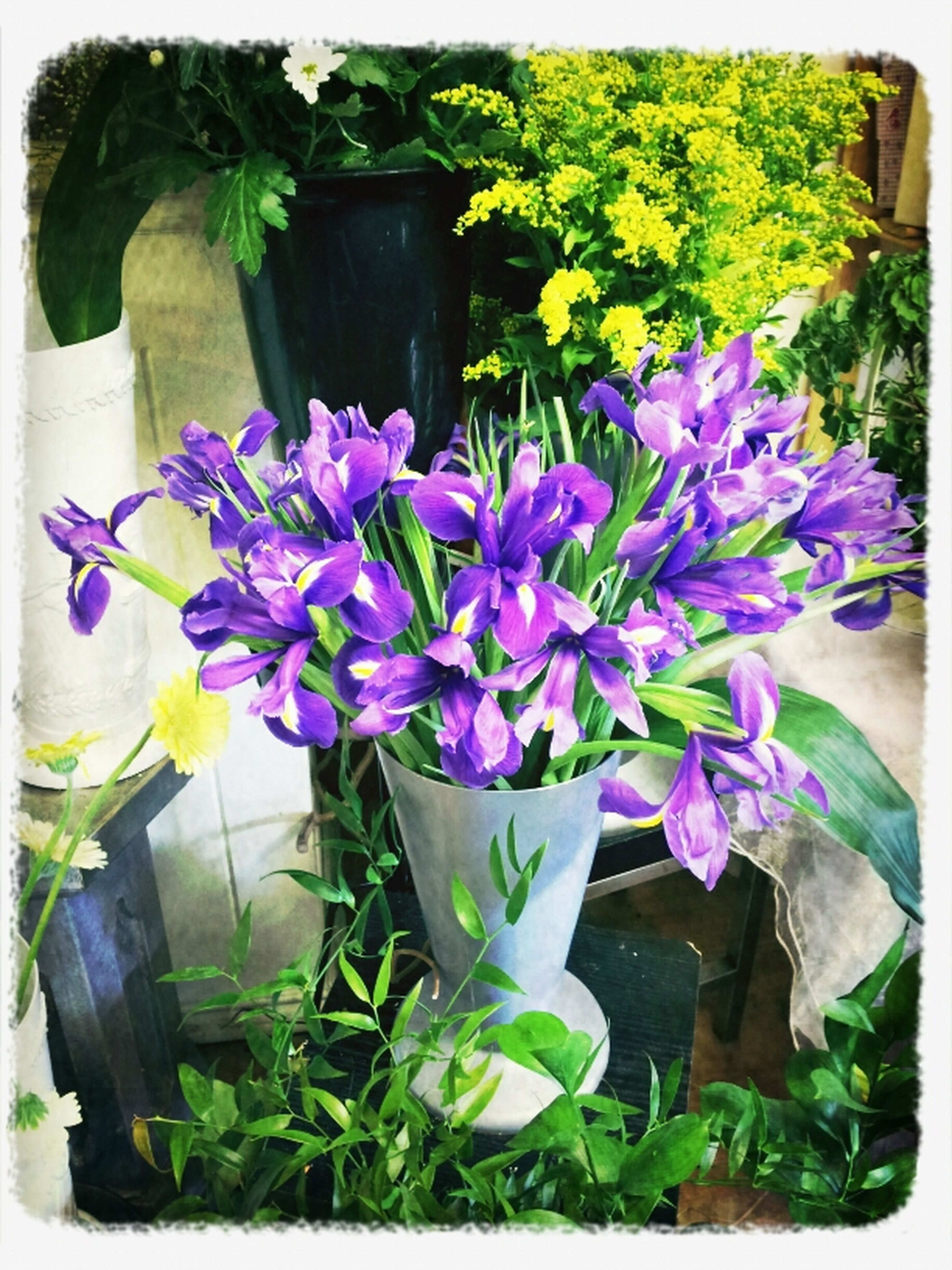 flower, transfer print, freshness, fragility, purple, auto post production filter, growth, plant, petal, potted plant, leaf, beauty in nature, flower head, nature, blooming, flower pot, no people, in bloom, day, multi colored