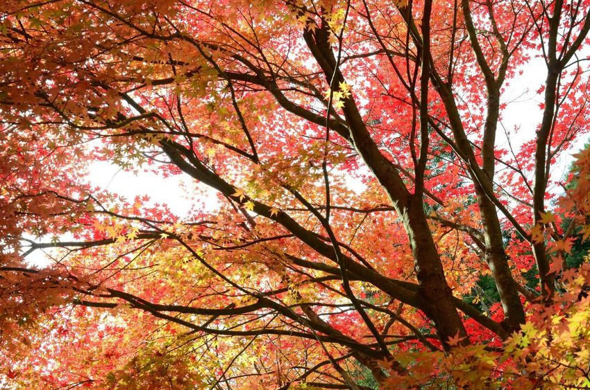 Tree Autumn Branch Beauty In Nature Nature Growth Low Angle View Exceptional Photographs The Week On EyeEm Photography EyeEm Gallery EyeEm Best Edits Colors No People Outdoors Day Leaf Scenics Tranquility Springtime Flower Pink Color Backgrounds Sky Fragility