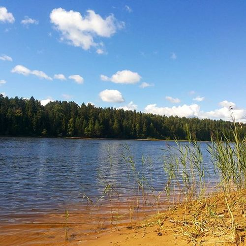 По утрам, мои рыбаки уезжали без меня) я просыпалась и топала загорать, на этот берег))) себла левыйберег песочек красота рыбинка