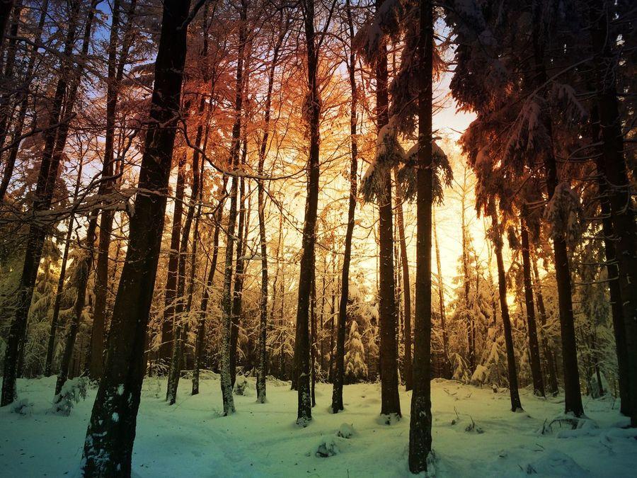 Sunset forest Mexturesapp EyeEm Best Shots Eyem Nature Lover Landscape_Collection Forest Nature_collection Tadaa Community EyeEmSwiss