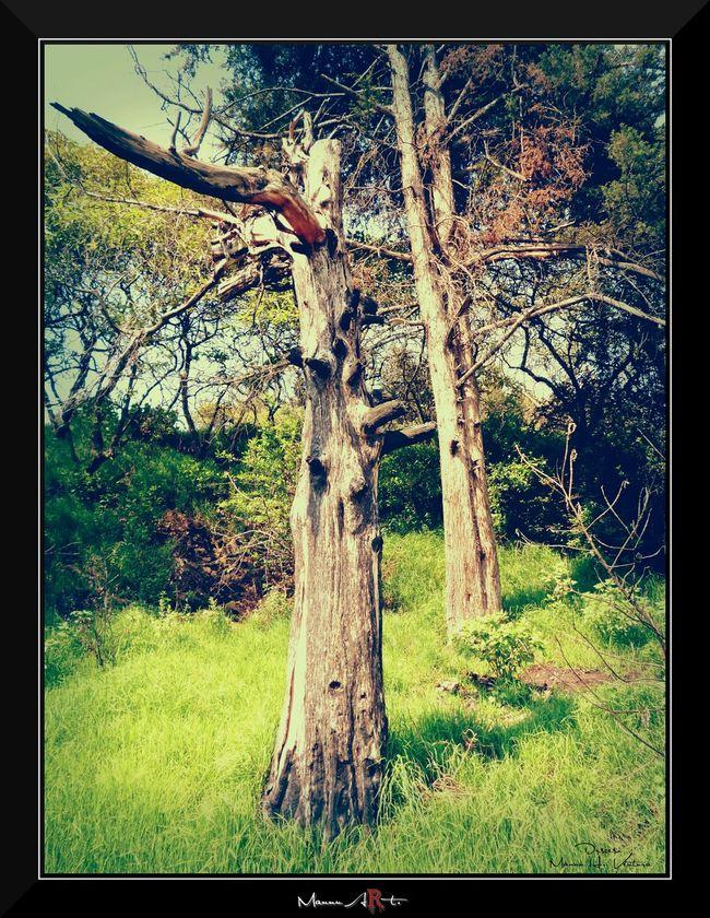 Tronco Arboles Arboles , Naturaleza Arbol. ArbolSeco Mi Arbol Favorito Trees Tree_collection  Tree Treescollection Tree Trunk
