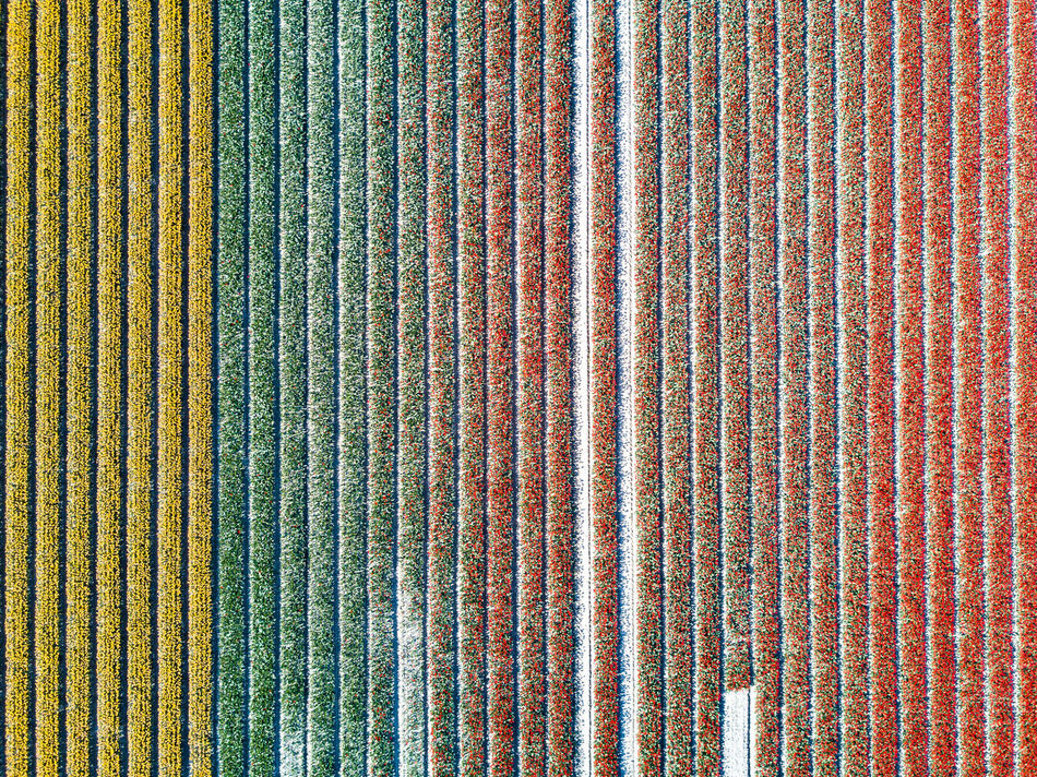 Flower fields, here in Zeeland, as seen from a drone. Argriculture Backgrounds Beautiful Colors Day Drone  Flora Flowers Full Frame Holland Looking Down Multi Colored Netherlands No People Outdoors Pattern Plant Spring Striped Textured  Tulips Zeeland  EyeEm Diversity Art Is Everywhere
