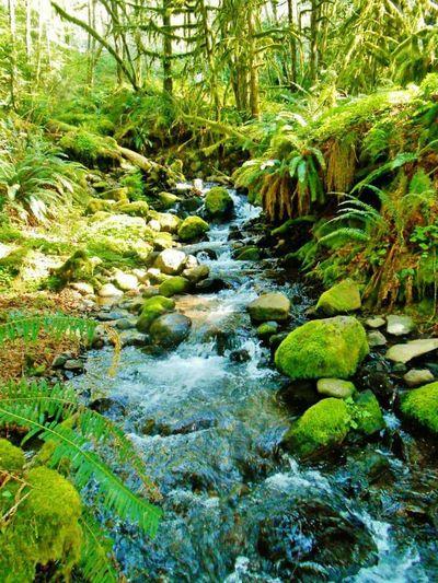 Nature Very Green Beautiful Peaceful Hike Waterfall
