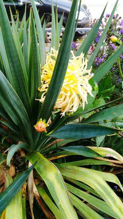 Fiore Foglielanceolate flower Nature