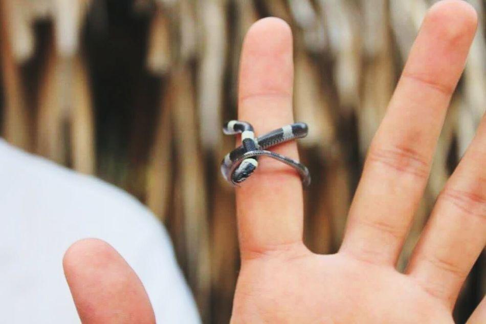 Human Hand Baby Snake Zacapa Love Nature First Eyeem Photo