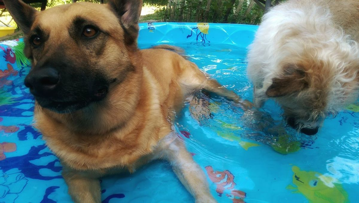 My Dogs❤️ Dogs In Water Dogs Having Fun Dogs Being Dogs...... Hot Afternoon Summer ☀ Summer Dogs Chillin' Chillaxing Chicago Summers