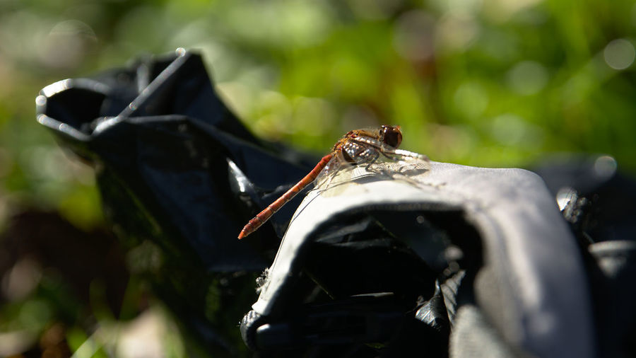 Animals In The Wild Dragonfly Focus On Foreground Insect Nature Photobag Selective Focus What's In Your Camera Bag? Wildlife