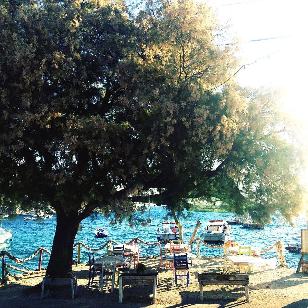 Zakhyntos Tree Island Greece Holiday First Eyeem Photo